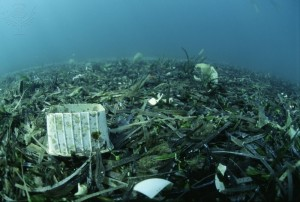 Our Goal: Combatting Plastic Pollution