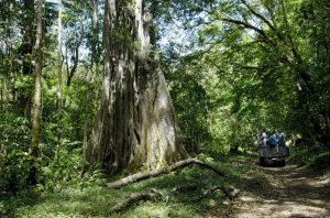 Ecotourism and the Environment