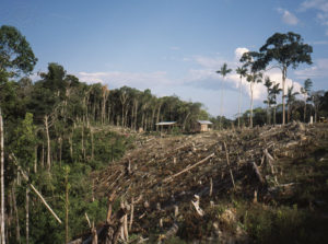 Deforestation: The Deadly Truth