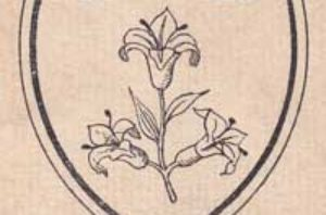 The St Mary's Lily