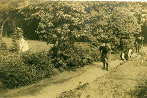 The New Garden 1936